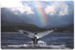 "766623423465, Manhattan, 17"" Laptop Skin, ""Whale with Rainbow "" (423465)"